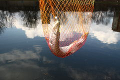 Catching pike fish. With tackle into a water stock photo