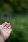 Catching Rain Drops Royalty Free Stock Images