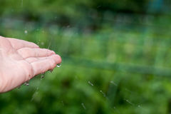 Catching Rain Drops Royalty Free Stock Photography