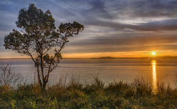 Single Tree at Sunset over Puget Sound Cliff Stock Image