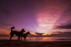 Catching Sunrise Royalty Free Stock Photography