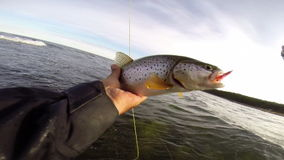 Catching a trout on fly fishing in the Baltic sea. Fly fishing in the ocean stock footage