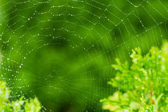 Catchy - a spider's web. With green, natural background Stock Photography