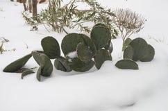 Catcus im Schnee Stockfoto