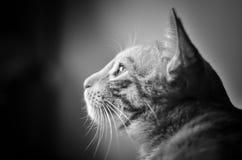 Catditation Foto de Stock