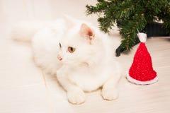 Cate bianco persiano che si trova vicino all'albero di Natale Immagini Stock