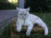 Cate mignon se reposant sur l'herbe Photo stock