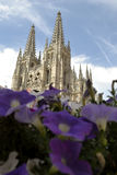 Catedral atrás das flores violetas, Espanha de Burgos fotos de stock