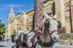 Catedral da mesquita de Córdova na Andaluzia, Espanha imagem de stock royalty free