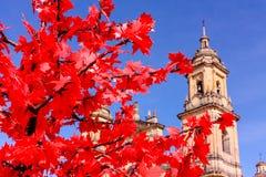 Catedral de Bogotá, Colombia Foco en árbol rojo Foto de archivo libre de regalías