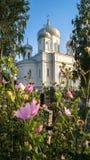 Catedral de piedra blanca bajo luz del sol de oro por una tarde clara del verano, ciudad de Rzhev, Rusia de la ascensión Foto de archivo libre de regalías