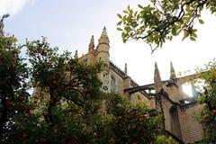 Catedral de Sevilha e árvore alaranjada, um símbolo de Sevilha e Espanha Foto de Stock