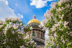 Catedral do ` s de Isaac de Saint nas flores do lilás e das árvores de Apple fotografia de stock royalty free