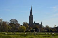 Catedral dos prados da água, Wiltshire de Salisbúria, Inglaterra imagens de stock