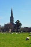 Catedral dos prados da água, Wiltshire de Salisbúria, Inglaterra imagens de stock royalty free
