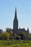 Catedral dos prados da água, Wiltshire de Salisbúria, Inglaterra fotos de stock