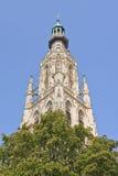 Catedral ornamentado com as árvores verdes no mercado velho, Breda, Países Baixos fotos de stock