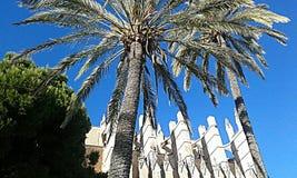 Catedral Palma de Mallorca Royalty-vrije Stock Foto