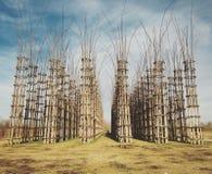 Catedral vegetal de Lodi, Italia Imagenes de archivo