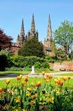 Catedral y tulipanes, Lichfield fotografía de archivo