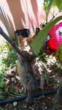 Caten kota zwierzęcy śmieszny beajty zdjęcie stock