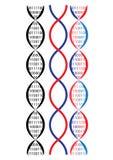 Catena del DNA Fotografia Stock Libera da Diritti