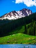 Catena montuosa degli alci della sommità dei picchi di montagna di Colorado Immagini Stock