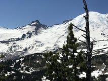 Catena montuosa del monte Rainier fotografie stock libere da diritti