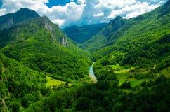 Catena montuosa e foreste del canyon della gola del fiume di Cesalpina, Montenegr fotografie stock