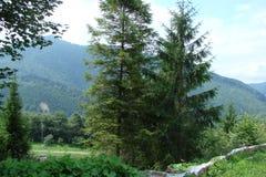 Catena montuosa vicino alla città di Skole, regione di Parascha di Leopoli l'ucraina Il paesaggio di vegetazione di fioritura fer Immagini Stock Libere da Diritti