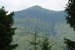 Catena montuosa vicino alla città di Skole, regione di Parascha di Leopoli l'ucraina Il paesaggio di vegetazione di fioritura fer Fotografia Stock Libera da Diritti