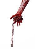 Catena sanguinosa della tenuta della mano, catena sanguinosa, tema di Halloween, fondo bianco, isolato Immagini Stock