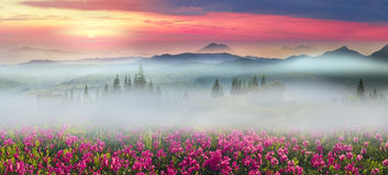 Catene montuose dell'Ucraina Immagine Stock