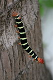 Catepillar Photographie stock