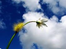 Catepillar giallo su un gambo del fiore Fotografia Stock Libera da Diritti