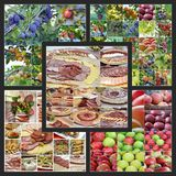 Catering food and fruits Royalty Free Stock Photography