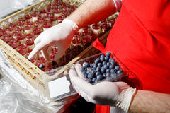 Catering suffle cooking. Catering suffle with berries cooking Royalty Free Stock Photography