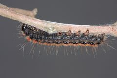 Caterpilar Stock Photography