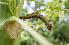 Caterpillar ändra royaltyfria bilder