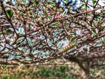 Caterpillar äter sidor i trädgården royaltyfri foto