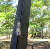 Caterpillar με τα αυγά σφηκών στοκ φωτογραφίες