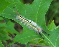 Caterpillar με τα αυγά Στοκ φωτογραφία με δικαίωμα ελεύθερης χρήσης