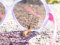 Caterpillar που δοκιμάζει τα γυαλιά ηλίου Στοκ Εικόνα