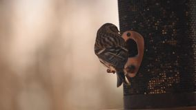 Caterpillar που τρώει τα φύλλα απόθεμα βίντεο