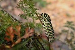 Caterpillar στοκ φωτογραφία