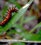 Caterpillar στη δράση Στοκ Εικόνα