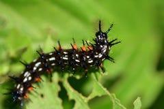 Caterpillar στον κήπο Στοκ Φωτογραφία
