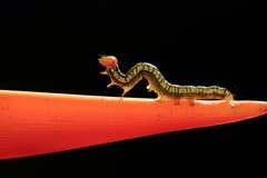 Caterpillar στο λουλούδι στοκ εικόνες με δικαίωμα ελεύθερης χρήσης