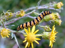 Caterpillar. On a flower Royalty Free Stock Image