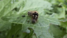 Caterpillar Στοκ εικόνα με δικαίωμα ελεύθερης χρήσης